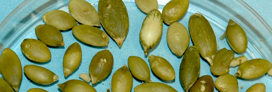 Blue Pumpkin Seeds